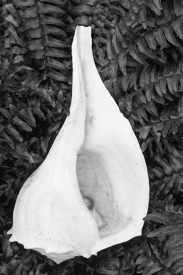 Shell Ferns.Shelldance Gardens.